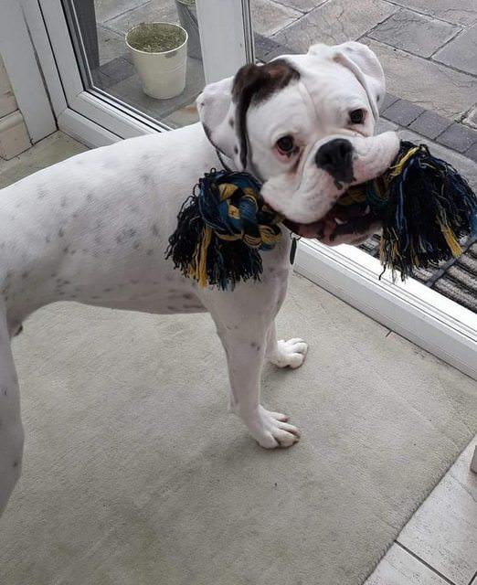 Cody rescue dog