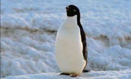 Google Penguin Jan 2016 - Browser Media