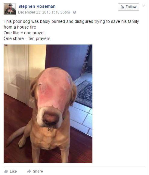 Ham Dog - My Five - Browser Media