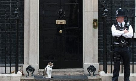 Larry Cat Number 10 via telegraph.co.uk - my five feature image - browser media