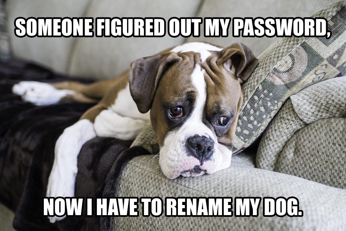 My Five 181 - Dog Meme