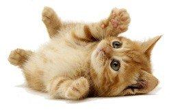 SEO cat