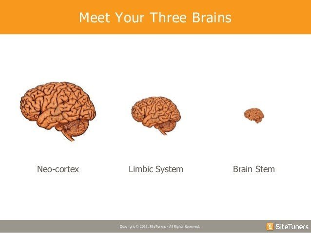 Tim Ash - convertcom webinar-pay attention understanding the brains need for novely shortcuts - Browser Media