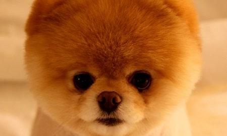 boo-facebook-dog-feature-image