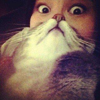 catbeard_thumb.jpg