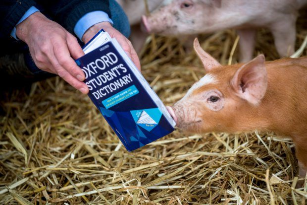 oxford english dictionary pig