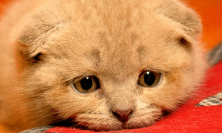 This is a sad cat