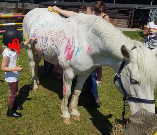 My Five #299 - BanPaintingPonyParties