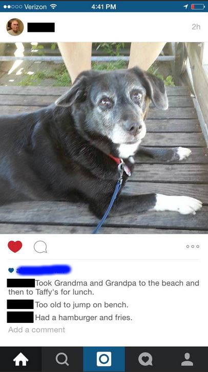 even your mate's uncle's dog's got instagram